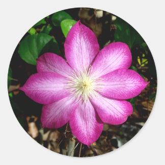 Pink Clematis Flower Stickers