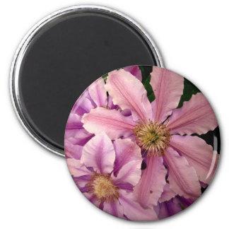 Pink Clematis Magnet Magnets
