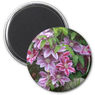 Pink Clematis Fridge Magnets