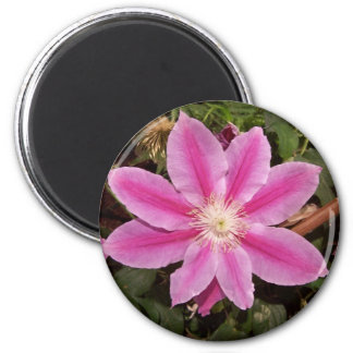 pink clematis 6 cm round magnet