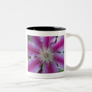 Pink Clematis Mug