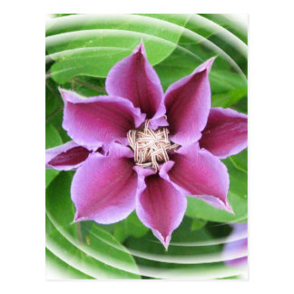 Pink Clematis Postcard