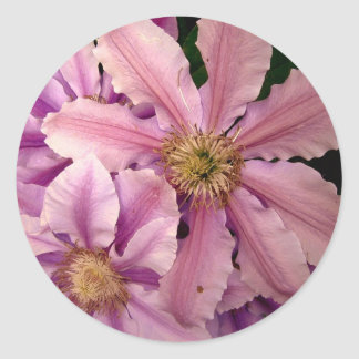 Pink Clematis Stickers