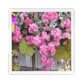 Pink Cliff Stonecrop Flowers Acrylic Tray