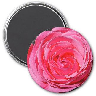 Pink Climbing Rose 7.5 Cm Round Magnet