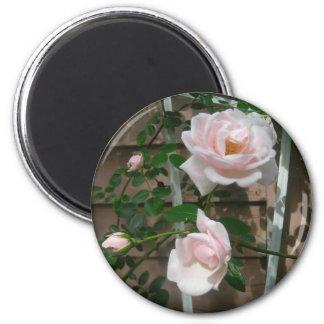 Pink climbing Roses 6 Cm Round Magnet