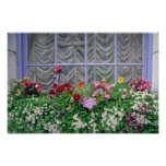 Pink Colourful flowerbox flowers Poster
