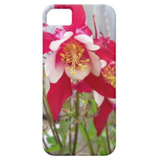 Pink Columbines iPhone 5 Cover