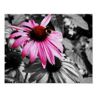 Pink Cone Flower Black and White Floral Poster