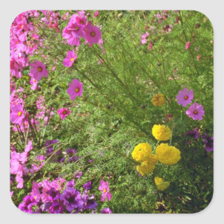 Pink Cosmos And Yellow Mums flowers Sticker