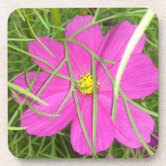 Pink Cosmos Flower Hiding Drink Coasters