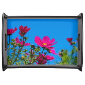 Pink Cosmos Flowers and Blue Sky Serving Tray