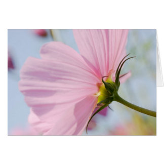 Pink Cosmos • Greeting Card