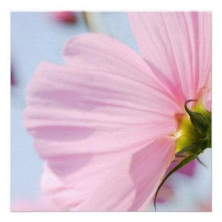 Pink Cosmos • Square Card Invitation