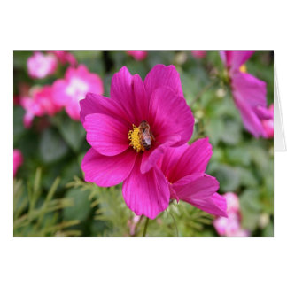 Pink Cosmos with a wasp Card