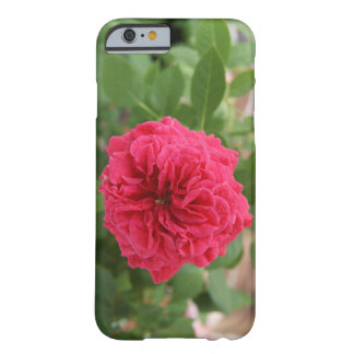 Pink Country Garden Rose Barely There iPhone 6 Case