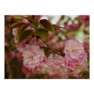 Pink Crabapple Blossoms Poster