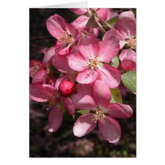 Pink Crabapple Card