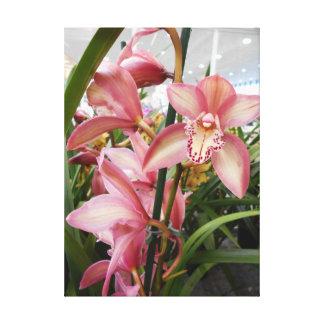 Pink Cymbidium Orchids Canvas Print