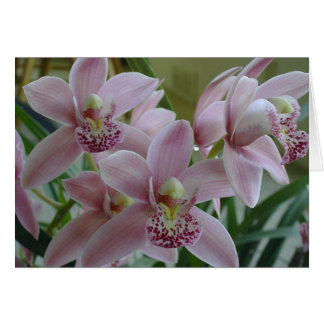 Pink Cymbidium Orchids Card