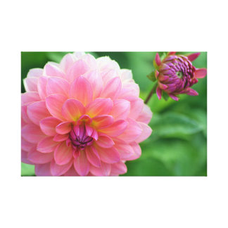 Pink Dahlia and Bud Canvas