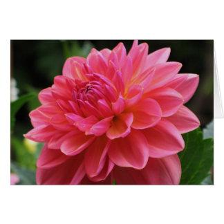 Pink Dahlia Greeting Card