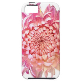 Pink Dahlia iPhone 5/5S Cover