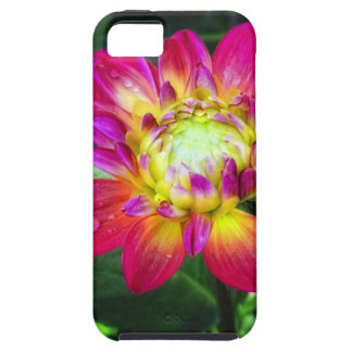 Pink Dahlia Case For The iPhone 5