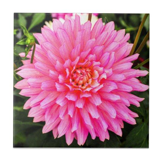 Pink Dahlia Ceramic Tile