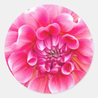 Pink Dahlia Classic Round Sticker
