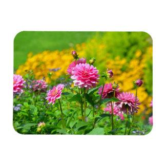 Pink dahlia flower garden magnet