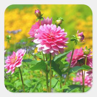Pink dahlia flower garden square sticker