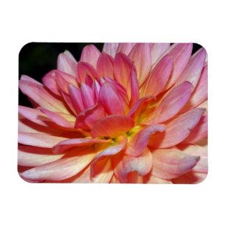 Pink dahlia flower magnet