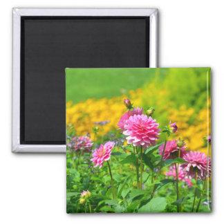Pink dahlia garden magnet