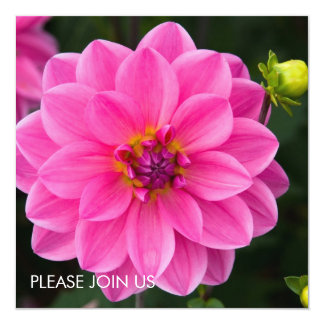 "Pink Dahlia 5.25"" Square Invitation Card"