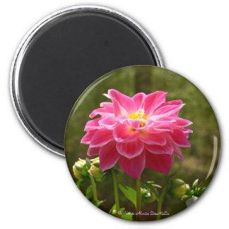 Pink Dahlia-Magnet Magnet