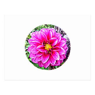 Pink Dahlia Original Design Postcard