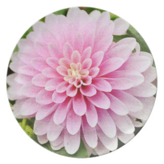 Pink Dahlia Party Plate