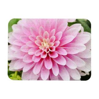 Pink Dahlia Rectangular Photo Magnet