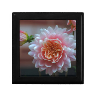Pink Dahlia Rila.JPG Gift Box