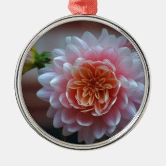 Pink Dahlia Rila.JPG Silver-Colored Round Decoration