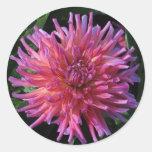 Pink Dahlia Round Stickers