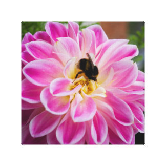 Pink dahlia with bumblebee canvas print