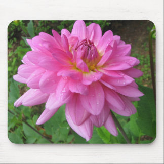Pink Dahlia with Rain Drops Mousepads