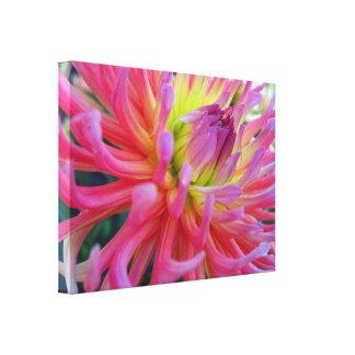 Pink Dahlia Wrapped Canvas Canvas Prints