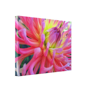 Pink Dahlia Wrapped Canvas Canvas Prints