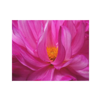 "Pink Dahlia's 14"" x 11"", 1.5"", Single Canvas Print"