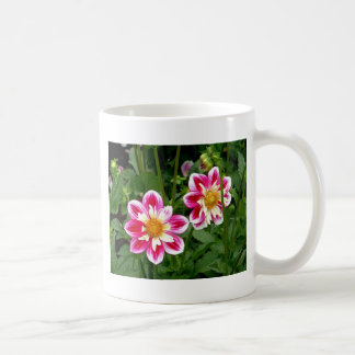 """Pink Dahlias...double trouble"" Mugs"