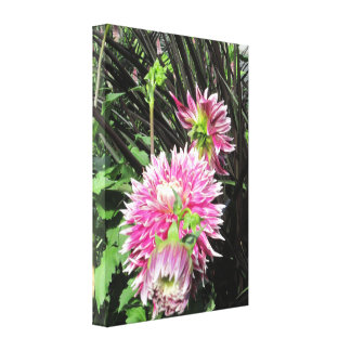 Pink Dahlias Wrapped Canvas Gallery Wrap Canvas
