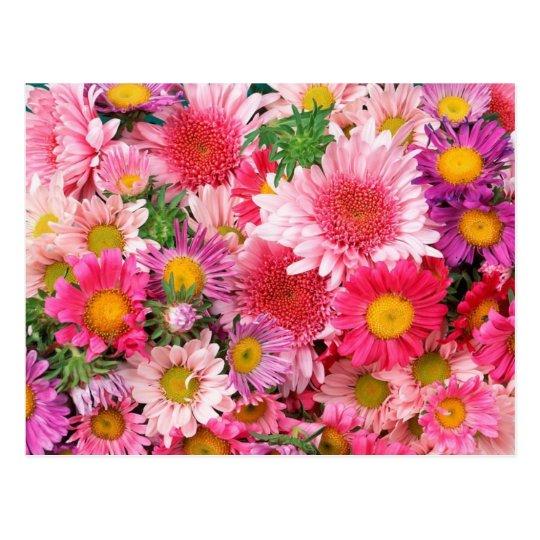 Pink Daisies Post Card